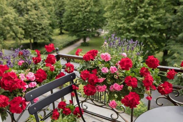 Gärtnerei: Garten, Terrasse & Balkon